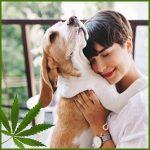 CBD & Canna for Pets